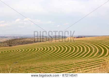Center Pivot Irrigated Farm