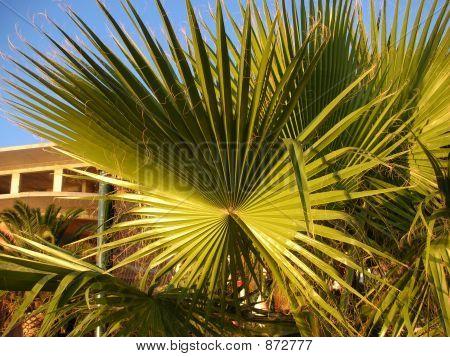 A Palm Tree Fan