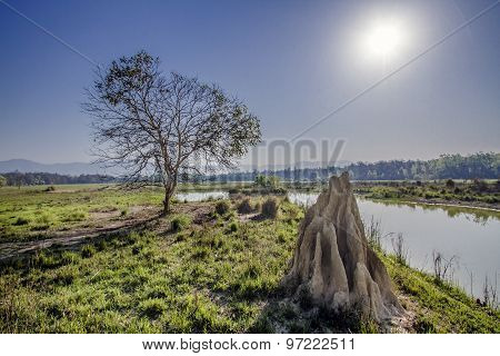 termite mound and river in Bardia national park, Nepal