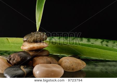 Water Running Down Leaf And Stones
