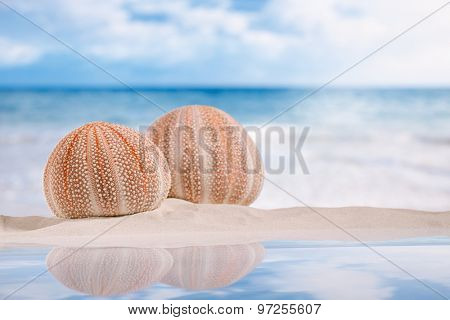 sea urchins - nice and colorful  on white sand beach, with reflection under the sun light ocean,  sky and seascape poster
