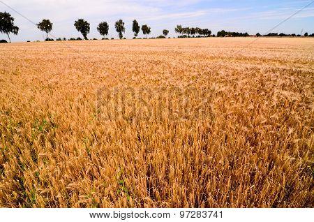 Textured Wheat Field