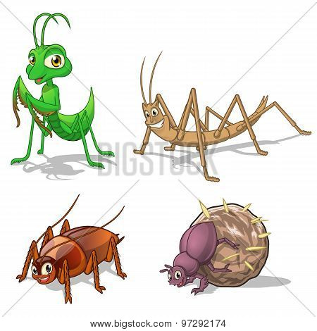 Insect Cartoon Character Vector Illustration Pack Five Include Mantis, Stick Insect, Cockroach and