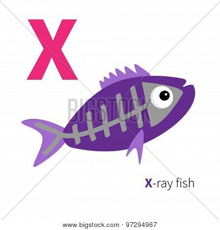 Letter X X-ray Fish Zoo Alphabet. English Abc With Animals Education Cards For Kids Isolated White B