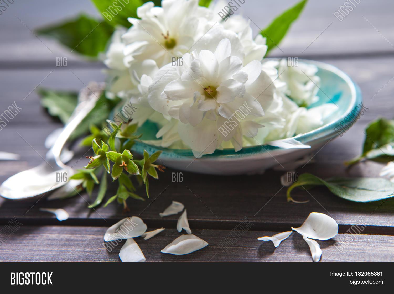 White Flowers Jasmine Image Photo Free Trial Bigstock