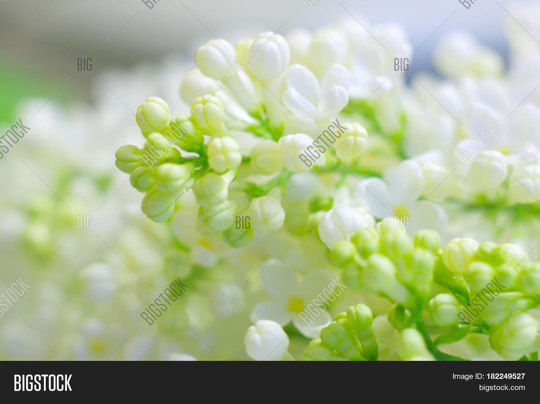Bright Spring Romantic Image Photo Free Trial Bigstock