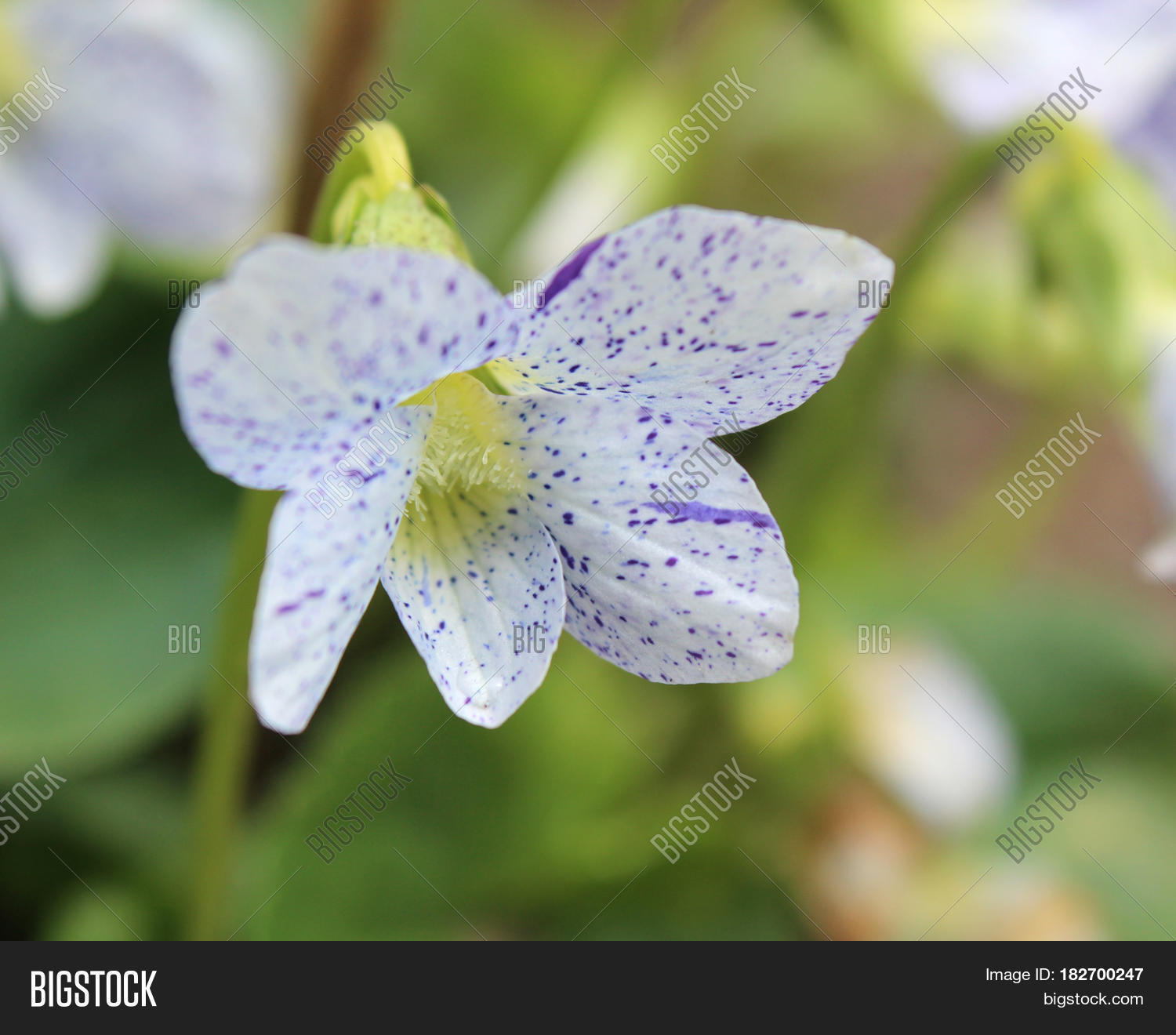 Unusual White Spotted Image Photo Free Trial Bigstock