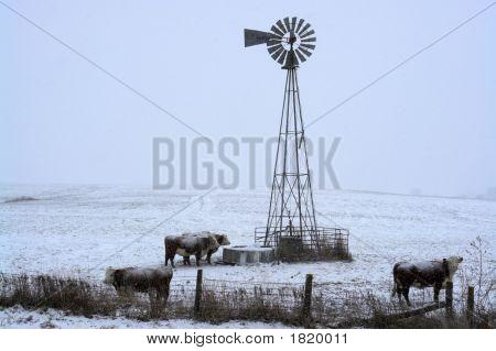 Snow Falling On The Farm