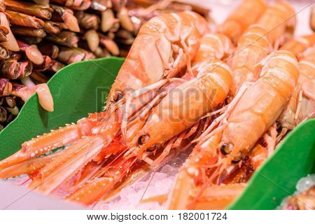 Fresh langoustines and razor clams at seafood market