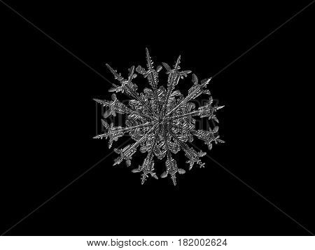Macro photo of real snowflake: rare, unusual snow crystal with 12 spear-like, elegant arms and fine symmetry. Black and white version. Snow crystal isolated on black background.