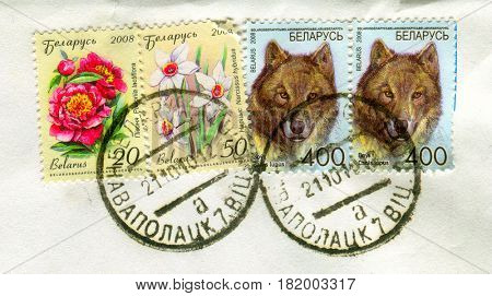 GOMEL, BELARUS, APRIL 15, 2017. Stamp printed in Belarus shows image of  The Narcissus hybridus, Paeonia lactiflora and Canis lupus, circa 2008.