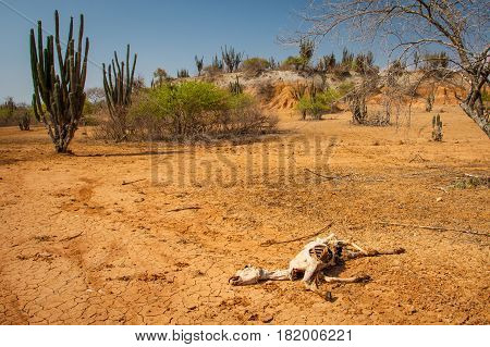 The Death in Tatacoa desert the driest place in Colombia