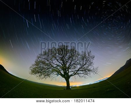 beautiful sky at night with startrails and silhouette of lonely tree on field