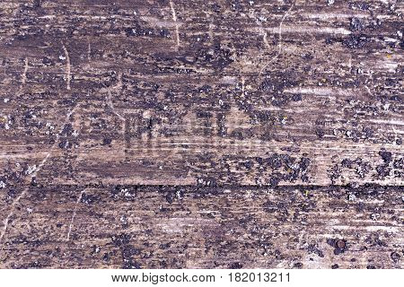 Grungy Wooden Borad Surface With Moss.