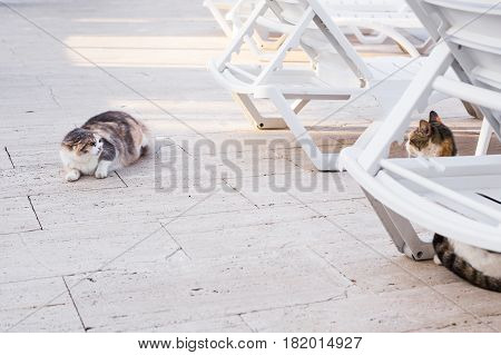 Concept of homeless animals - Stray dirty sadness cat on the street.