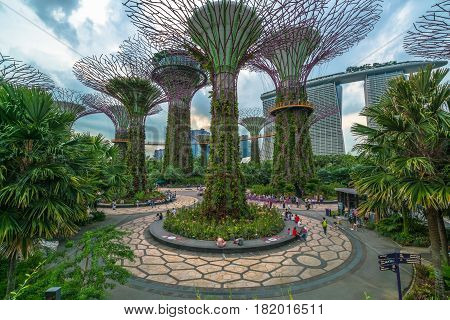 Singapore City SINGAPORE - FEBRUARY 10 2017 : Supertree Grove at Gardens by the Bay is the famous tourist attraction in Singapore representing hi-tech science of Singapore.
