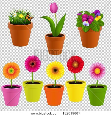 Flower In Pot Collection