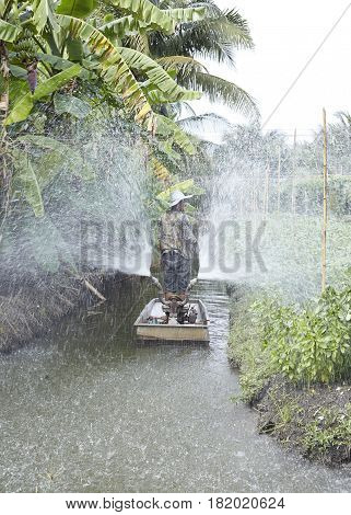 Vegetable Garden Plant Vegetable Basil, Sufficiency, Agriculture, thailand,