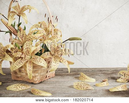 lily in basket on background old white wall