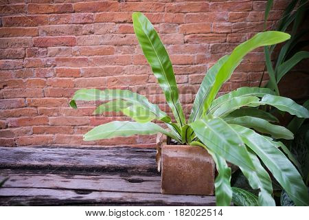 Tropical plant in the garden on wood table