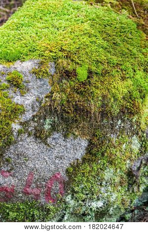 Large Stone Covered With Moss