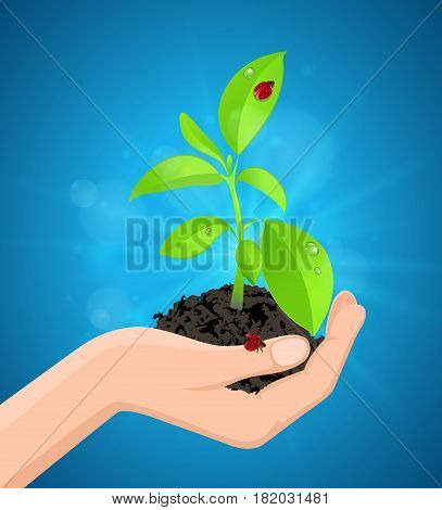 Young green plant and ladybird in hand on a blue background. Ecological concept.