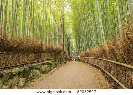 Kyoto Japan - November 26 2015: Blur motion of unidentified people visit bamboo forest in Arashiyama of Kyoto Japan. Arashiyama is a nationally-designated Historic Site and Place of Scenic Beauty.
