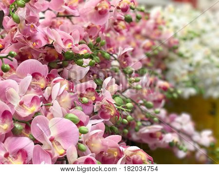 Pattern of beautiful pink orchid background - selective focus