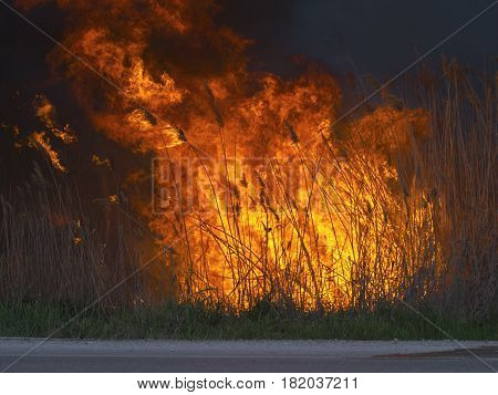 The big huge fire near the road