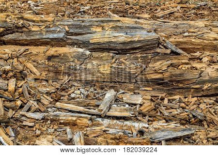 Wood trunks invegecida and chopped by the passage of time