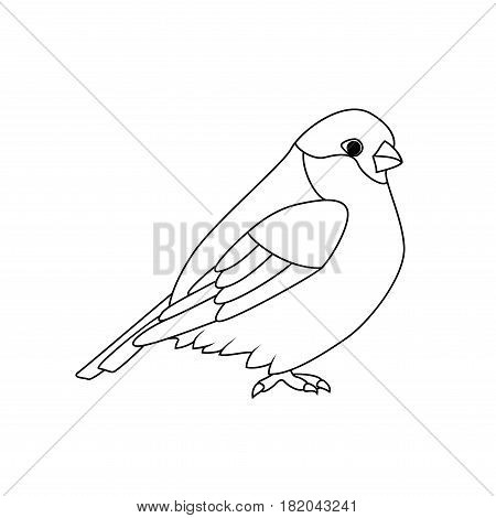 Coloring book: Bullfinch on a white background