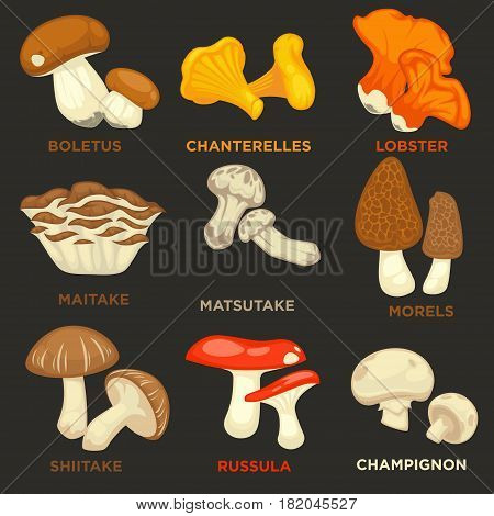 Mushrooms isolated flat icons set. Vector edible champignon and boletus, chanterelle and lobster mushroom, maitake or matsutake and shiitake, morels and forest russula