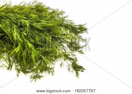 Dill plant, green dill, a bunch of dill, white background with dill pictures