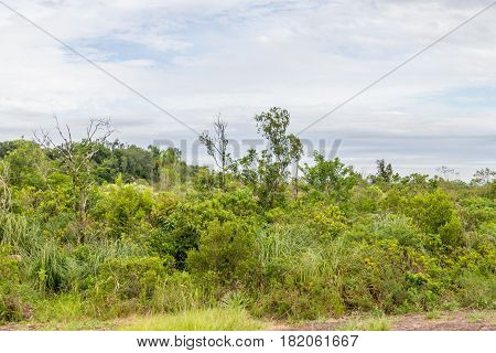 Morro Do Gaucho Mountain Vegetation