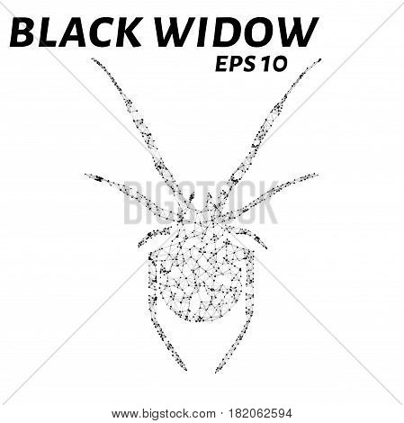 Black Widow Consists Of Points, Lines And Triangles. The Polygon Shape In The Form Of A Silhouette O