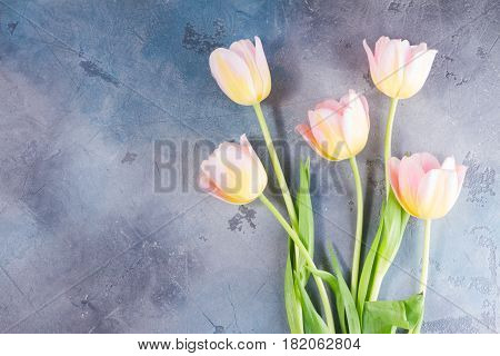 Pink and yellow tulip flowers posy on gray stone background