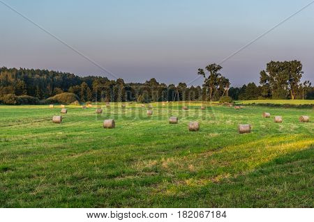 Straw bales on a field in Kujawy-Pomerania Province of Poland