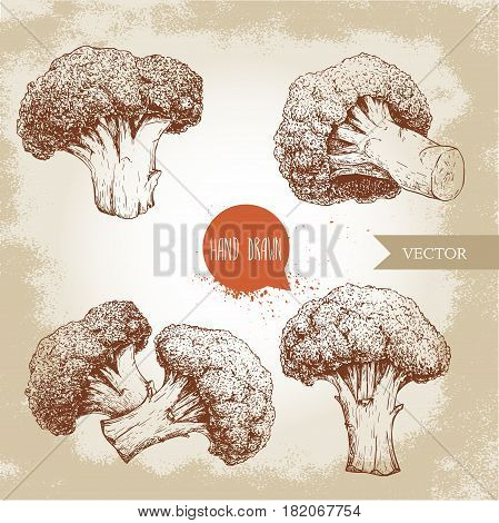 Hand drawn sketch style set illustrations of broccoli. Healthy ecological food vintage vector illustration. Broccoli compositions isolated on grunge background
