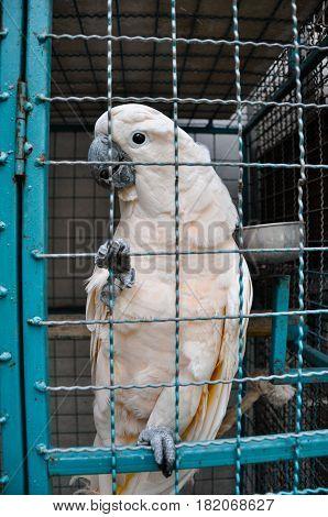 Thailand Phuket convict white parrot hot weather