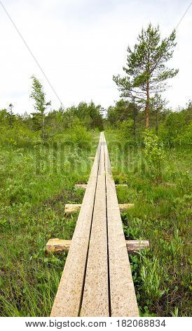 Natural park wooden path in marsh area