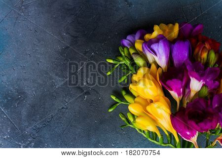 Posy of fresh freesia flowers close up on gray stone background with copy space