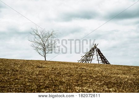 Lonely fir tree on horizon and rural country