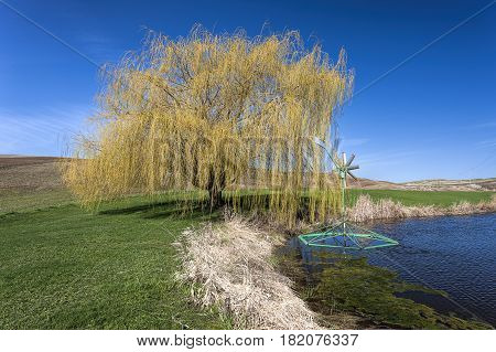 Pretty yellow tree by pond in Eastern Washington.