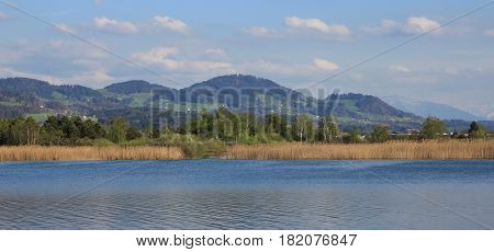 Reed on the shore of lake Pfaffikon Switzerland. Bachtel hill in Zurich Canton.