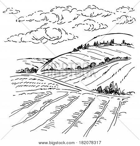 Landscape ink sketch drawing. Rural mediterranean engraved landscape with plowed fields, cypresses and pine tree.Countryside landscape with hills, fields, trees.