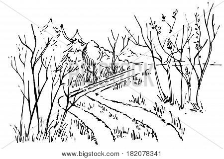 Sketch path in the forest. Hand drawn Ink foggy forest road. Road in countryside, Hand drawn landscape
