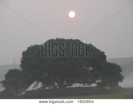 Hay Tree