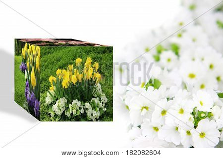 3D Cube flower Petunias, Yellow daffodil, pansies, snapdragon and marigold, beautiful flower background