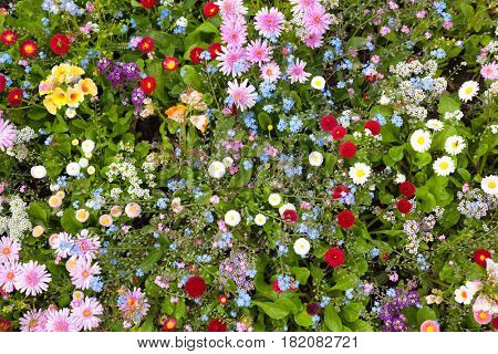 Abundance of blooming wild flowers on the meadow at spring time. Top view.