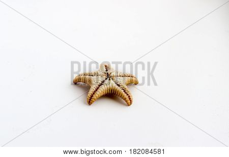 Beautiful Starfish On A White Background